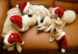 christmas-time-cute-dogs-sleeping-sofa-Favim_com-309730