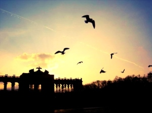birds-photography-sight-sunshine-vienna-Favim_com-112540