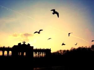 birds-photography-sight-sunshine-vienna-Favim_com-112540