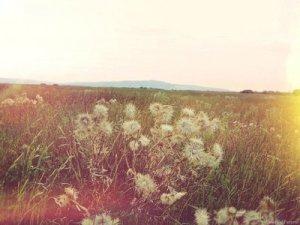 beautiful-breathtaking-indie-indie-landscape-Favim_com-713199